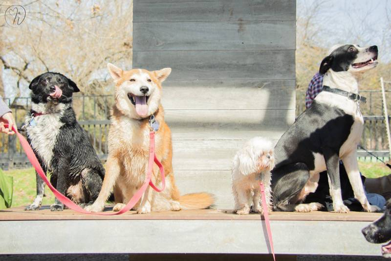 Group Pup Picture