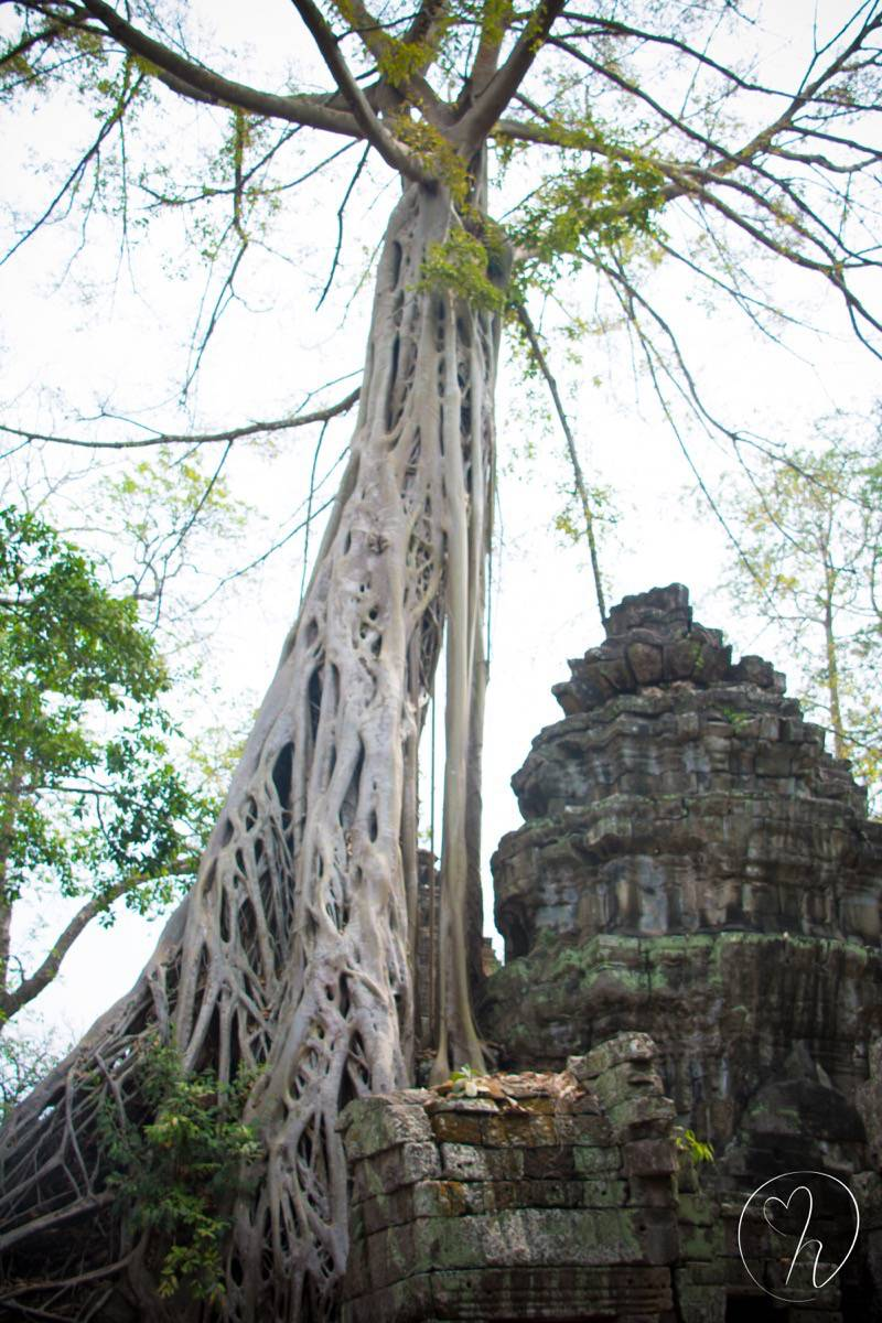 tree over temple long