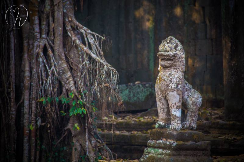 lion with forest